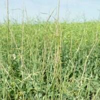 Un champ d'herbe lors d'une journée d'été ensoleillée.