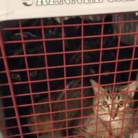 Plusieurs chats dans une cage.