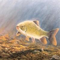 Un dessin représentant le poisson.