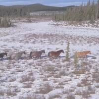 Sept chevaux marchent en file dans la neige, avec des conifères et des collines à l'arrière-plan.