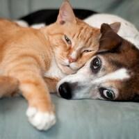 Un chien et un chat collés l'un sur l'autre, couchés sur un sofa.
