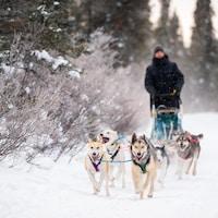 des chiens tirent un homme aux commandes d'un traineau dans la neige.