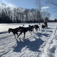 Six chiens tirent un traîneau sur la neige dirigé par une personne.