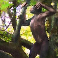 Illustration artistique d'un Danuvius guggenmosi se tenant sur ses deux jambes dans un arbre.