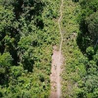 Plan aérien d'une zone forestière traversée par une route.
