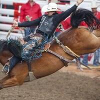 Thurston, de Big Valley, en Alberta, tente de rester sur le cheval Get Smart pour remporter la compétition du cheval sauvage pour une troisième année de suite lors du Stampede de Calgary, le 16 juillet 2017.