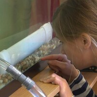 Une élève de sixième année de l'école Saint-François-d'Assise, à Longue-Pointe-de-Mingan, observe des oeufs d'alevins .