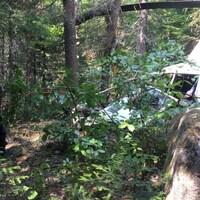 La carcasse de l'appareil se trouve entourée d'arbres et de plantes.