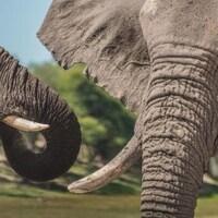 Deux éléphants dans la savane africaine.