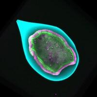Une sphère dans laquelle se trouvent des cellules.