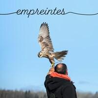 Un faucon se pose sur le gant du fauconnier.
