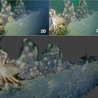 Trois images prises sous l'eau montrent un crabe qui est accroché sur une partie de l'épave en gros plan.
