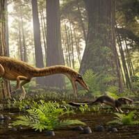 Illustration artistique d'un Erythrovenator jacuiensis dans son environnement.