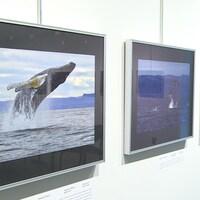 Des photos de baleines sont affichées au mur dans des cadres.