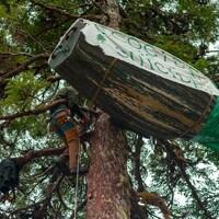 Un homme grimpe dans un arbre vers une barque en bois qui y est accrochée.