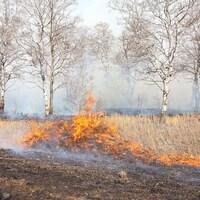 Un feu de broussailles près d'un boisé.