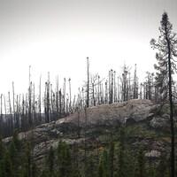 Des arbres brûlés à Baie-Johan-Beetz