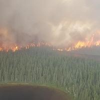 Une forêt qui brûle