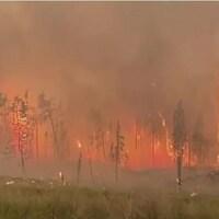 Un feu de forêt brûle des conifères et provoque un immense panache de fumée.
