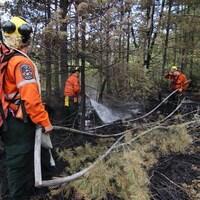 Des pompiers éteignent un feu de forêt.