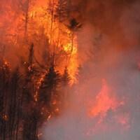 Le feu consume une partie d'une forêt.