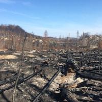Des arbres brûlés.