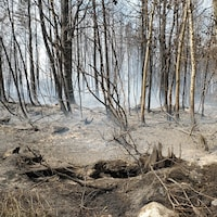 Des arbres et de la terre brûlés par un feu de forêt à Rivière-Ouelle.