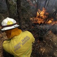 Un pompier regarde des arbres et des broussailles en train de brûler.