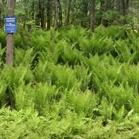 La petite forêt cédée par Claudette Barabé à la Fiducie de conservation des écosystèmes de Lanaudière.