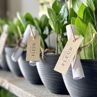 Des pots de plantes sur une étagère.
