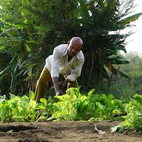Un homme cultive une terre.