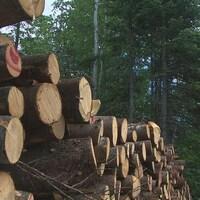 Cordes de bois en forêt