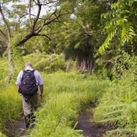 Le scientifique de l'Université de l'Alberta Arturo Sanchez dans le parc national Santa Rosa, au Costa Rica.