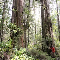 Une homme se tient debout devant un arbre dans une forêt.