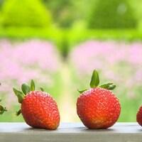 Quatre fraises rouges alignées sur une table.