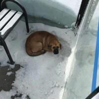 Un chien couché dans un abri d'autobus à Regina