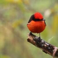 Un oiseau sur une branche.