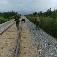 Des hommes en uniforme ratissent une voie ferrée avec un chien renifleur.