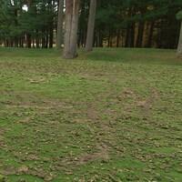 Des traces de roues sur un terrain de golf.