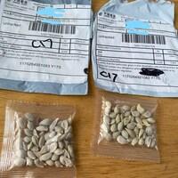 Une photo des enveloppes, avec des sachets de graines à côté.
