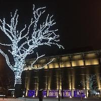 Un très grand arbre illuminé.