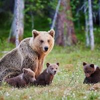 Une famille de grizzlys.