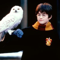 Harry Potter avec Hedwidge.