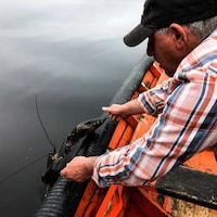 Reg MacDonald remet le homard à l'eau.