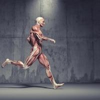 Illustration de la musculature d'un homme qui court.
