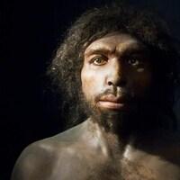 Reconstruction d'un Homo Antecessor réalisée par l'artiste Élisabeth Daynès.