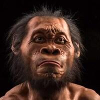 Reconstitution artistique de la tête d'Homo naledi.