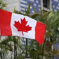 Un drapeau du Canada flotte devant des fougères.