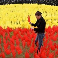 Une jeune femme est en train de planter dans le sol une main rouge. Autour d'elle, des dizaines de mains similaires sont déjà plantées. Elles sont de couleurs jaune (le soleil), rouge (la terre du désert) et noire (la couleur de leur peau).