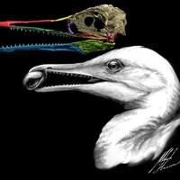 Représentation artistique de la tête de l'Ichthyornis dispar.